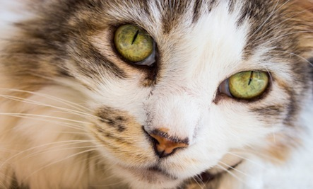 10 Things To Do Before Adopting a Cat