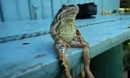 Funny Animals Behaving Like Humans Video