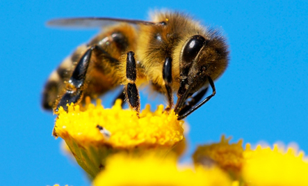 5 Amazing Efforts to Save the Bees