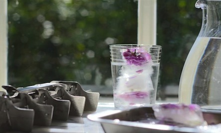 Make Your Own Shimmering Rose Petal Ice Cubes