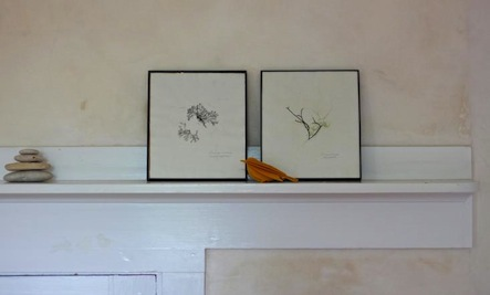 DIY Pressed Seaweed Prints