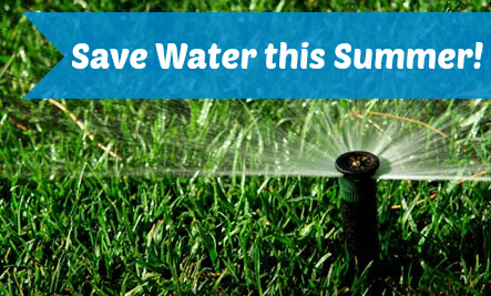 Conserve Water this Summer with These Simple Tips