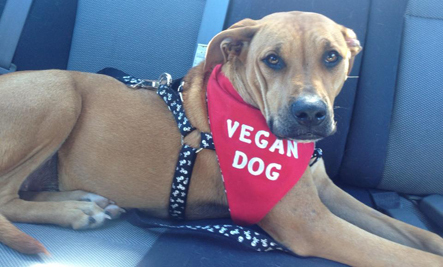 Great New Resources for Vegan Dogs and Cats