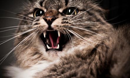 Feral Cat 'Gang' A