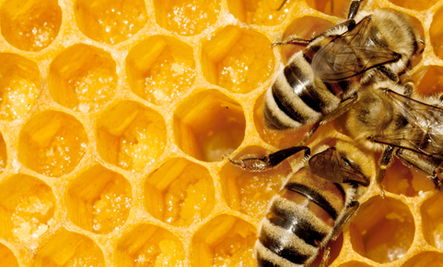 8 Things You Can Do to Help Save the Honey Bees