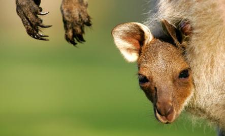 Mother Nature's Animal Quiz