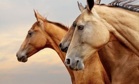 Horse Slaughter Halted in the US
