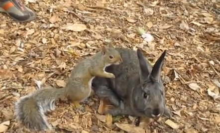 Daily Cute: Squirrel Can't Take His Paws Off Adorable Bunny