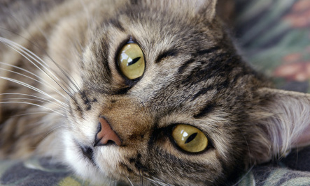 Signs & Symptoms of Feline AIDS