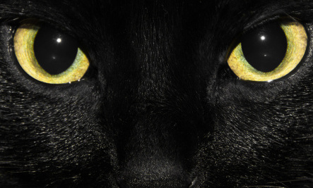 1237 best images about Black Cat Love on Pinterest