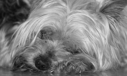 Choke Chain Kills Dog