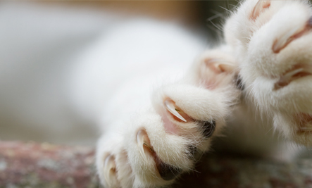 How Declawing Harmed My Cat