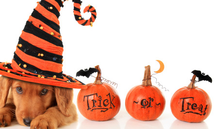 Are Halloween Costumes OK for Pets?