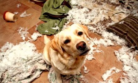 Image result for bad pet