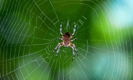 3 Ways Spider Silk Could Save Your Life