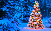 Festive & Fun Christmas Quiz
