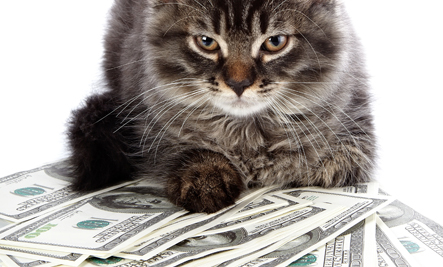 When Your Cat Charity Donations Are Questioned