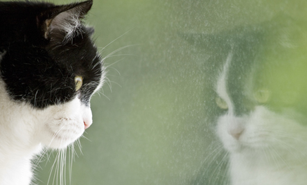 4 Ways to Help Cats Overcome Losing a Feline Friend