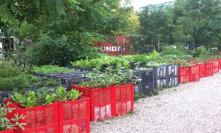 Developers Destroy NY Community Garden