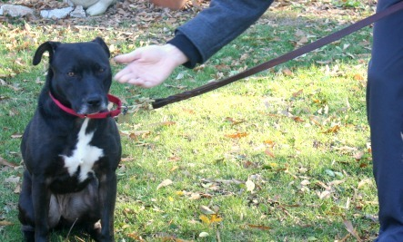 Dog Body Language: What is Your Dog Trying to Tell You?