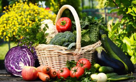 Grow Your Own Mediterranean Garden!
