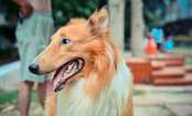 5 Lessons Your Dog Can Teach You About Success