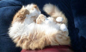 Fluffball Kitty–Caption This Cute Photo!