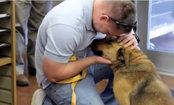 Microchip Saves Lost Dog of 7 Months. Watch Her Reunite With Family (Video)