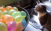 Kitten Curiously Pops Bucket of Water Balloons (Video)