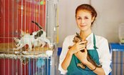 25 Creative Ways to Help Animal Shelters