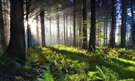 21 Reasons Why We Need Forests