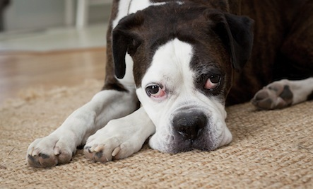 Chemical-Free Carpets, Rugs and Pads