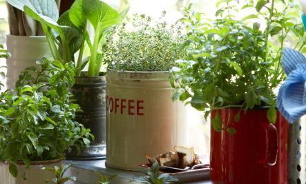 16 DIY Container Garden Ideas