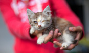 260 Cats Rescued From 'Crazy Cat House' in Philadelphia