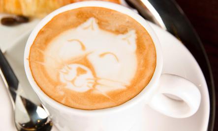 Cat Cafes Spread Across the World — Finally Reach the U.S.