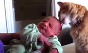 Cats & Dogs Meet Babies for the First Time (Video)