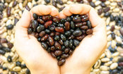 Overlooked Superfood Lowers Cholesterol
