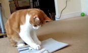 Cat Expresses How We Really Feel About Musical Greeting Cards (Video)