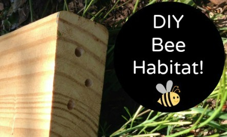 Build a Native Bee Habitat from Reclaimed Wood