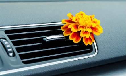 9 DIY Car Air Fresheners to Spruce Up Your Ride