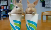 Bunnies Are Better Than Beverages (Video)