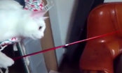 Cat Goes Fishing for Wrong Species (Video)