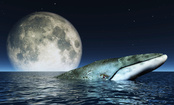 15 Weird Facts About Whales (Plus 4 Amazing Videos)