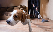 5 Steps to Reduce Your Pet's Stress