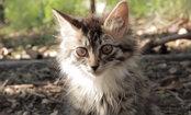 Daily Cute: Dog Befriends Disabled Kitten