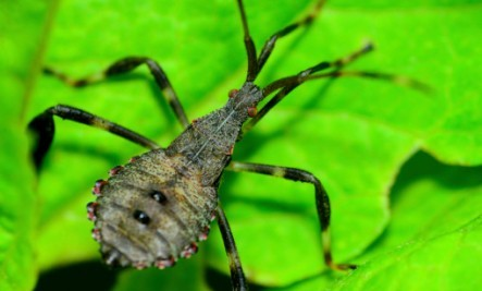 15 deadliest animals in the world care2 healthy living