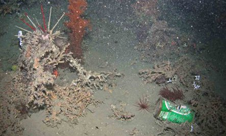 Thanks To Humans, Ocean Floor Is Now a Garbage Dump