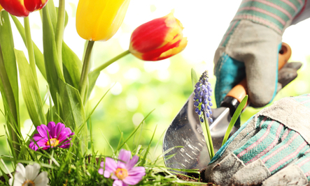 Love to Garden? Here's Your May 'To-Do' List!