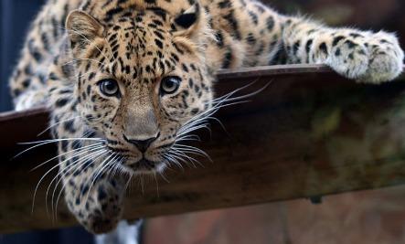 Top 10 Endangered Species