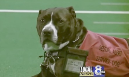 Service Dog Receives College Diploma